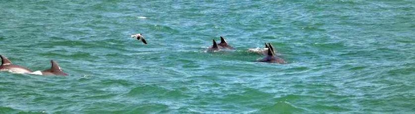 The Original Myrtle Beach Dolphin Cruise - Since ...