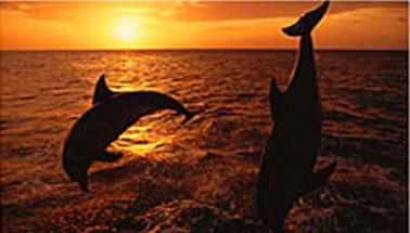 Deep Sea Fishing Calabash - Hurricane Fishing Fleet ...